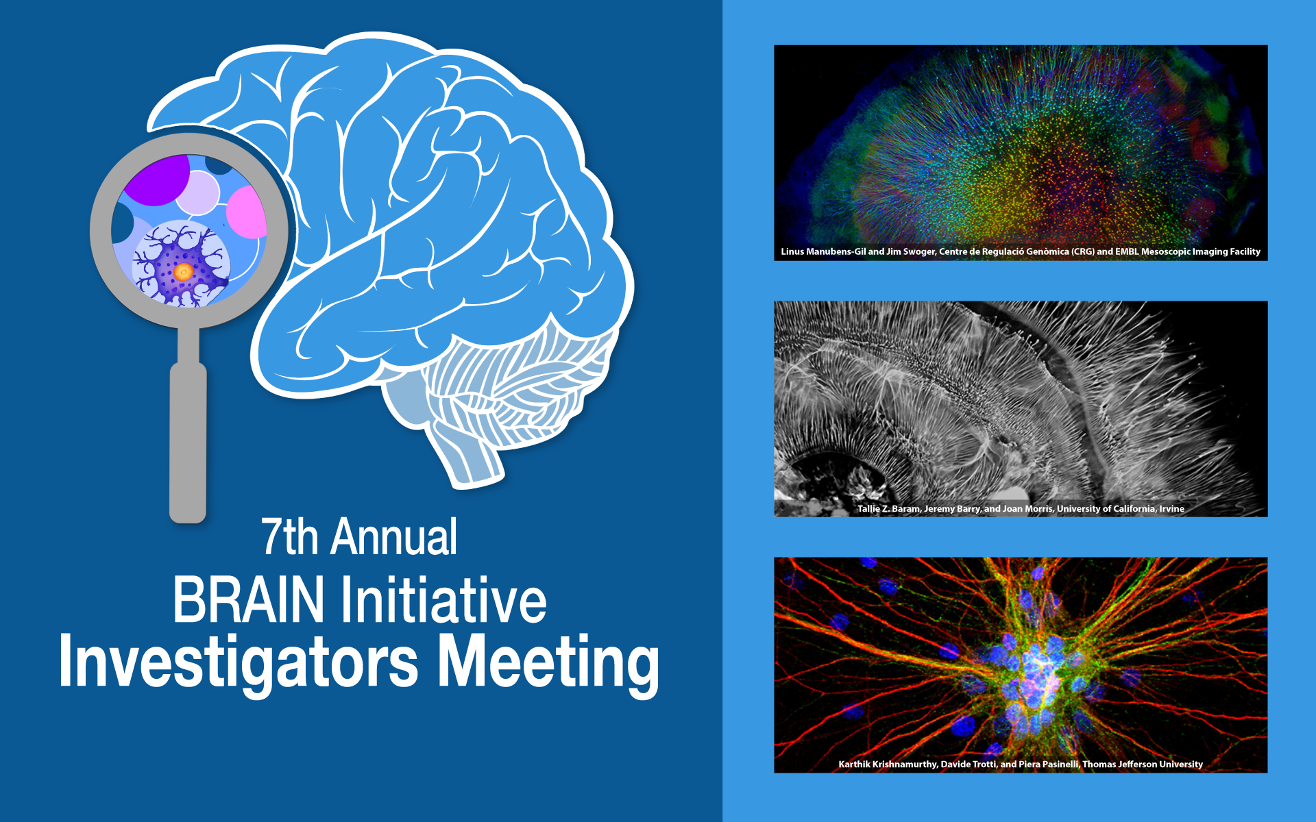 7th Annual Brain Initiative Investigators Meeting banner with three winning images from last year's photo and video contest